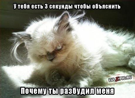 post-31-1325624770.jpg