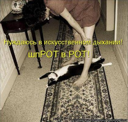 post-72179-1326314410_thumb.jpg