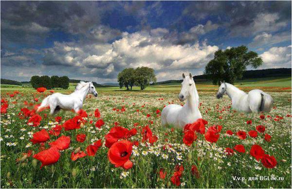 кони.png