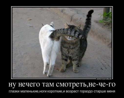 y_8d5183d1.jpg
