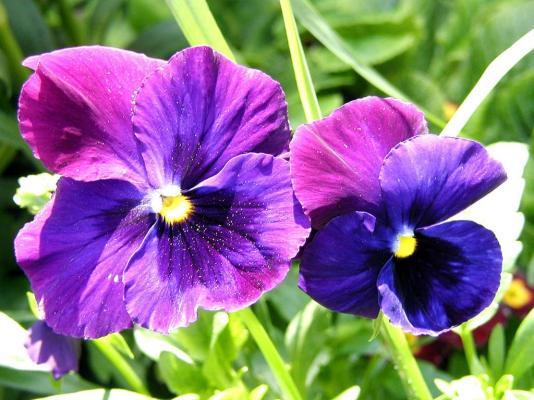 www_flowerjpg_ru_5.jpg