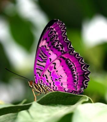 71999484_butterfly_4.jpg