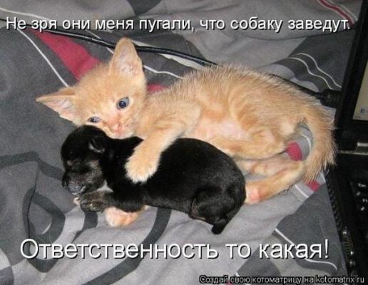 post-31-1335121834_thumb.jpg