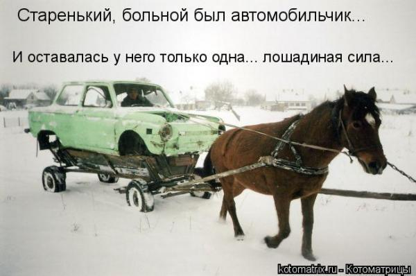 kotomatritsa_in.jpg