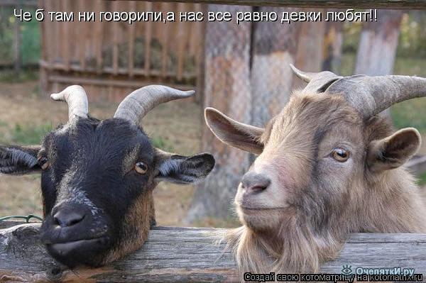 козлы.jpg