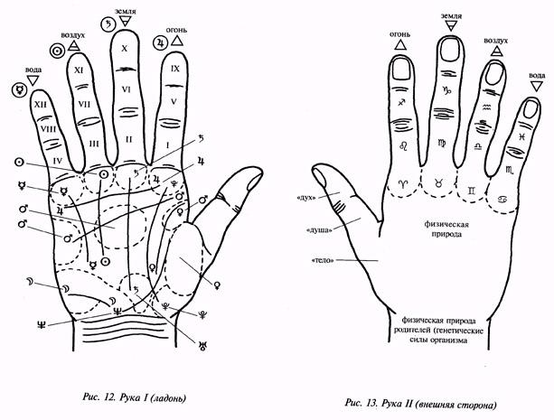 Фаланги пальцев рук и ног nazdorru