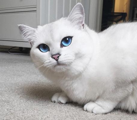 Eyes_cat_coby-16.jpg