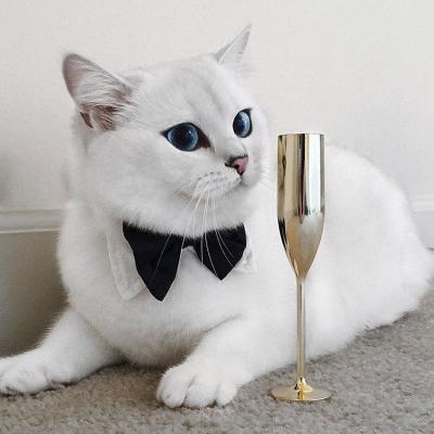 Eyes_cat_coby-6.jpg