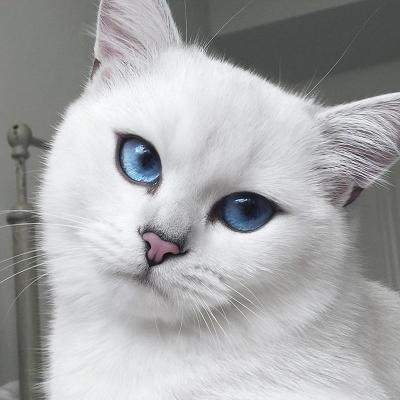 Eyes_cat_coby-11.jpg