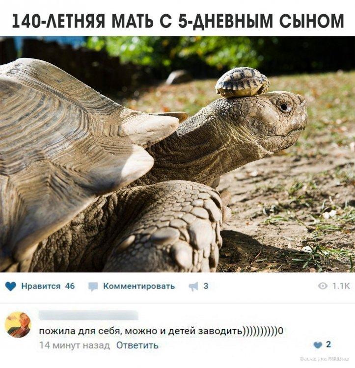 черепахи.jpg