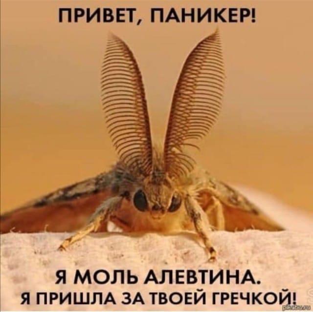 image.png.cd11f62f1a70af448fbc8096c35bd20d.png